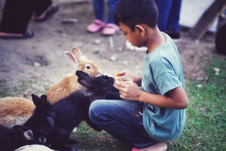 Feeding Animals Rabbit Carrot Friendship Pets Child Sitting Happiness Childhood Young Animal Cute Smiling Care Farmland