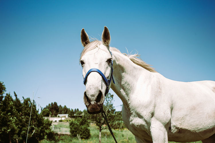 Horse against clear blue sky