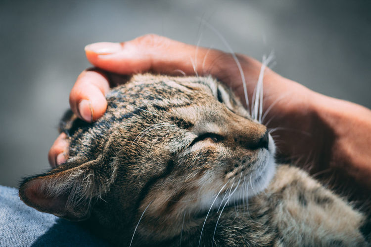 Cropped Hand Petting Cat