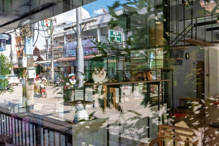 Architecture Glass - Material Reflection Building Exterior Transparent Built Structure City Window Incidental People Day Outdoors Business Building Street Store Lifestyles Nature Vertebrate People