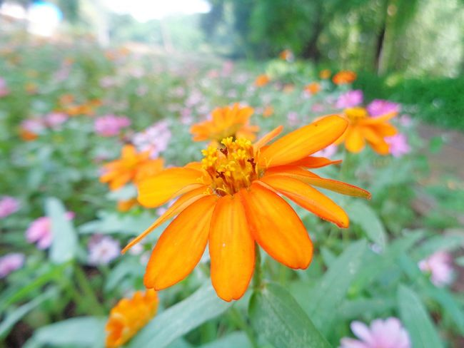 Flower Orange Color Beauty In Nature Nature Plant Petal Freshness Insect Flower Head Animal Wildlife Outdoors Front Or Back Yard Fragility One Animal Day No People Growth Animals In The Wild Flowerbed Nature Reserve