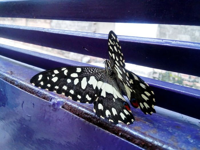 Home Is Where The Art Is Butterfly Butterfly On Gate Metal Gate Gate Mobile Photography Colourfull Different Perspective Popular Metal Structure Lime Butterfly Adapted To The City