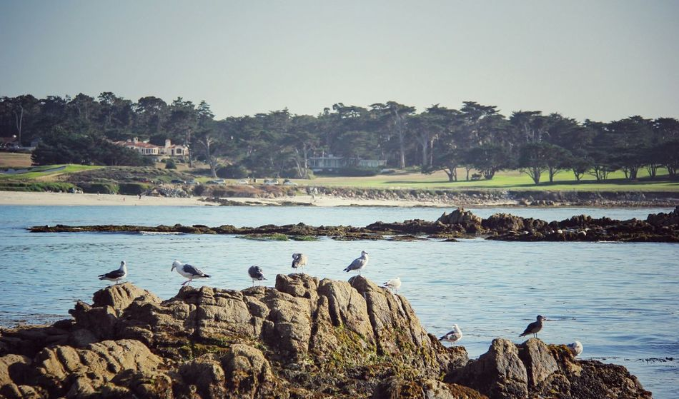 One of the beautiful and scenic neighborhood in California. 17 Mile Drive Pebble Beach Bird Rock White Pegions Birds Pigeons Summer2015 EyeEmbestshots EyeEm Birds Rocky Beach The KIOMI Collection Landscapes With WhiteWall
