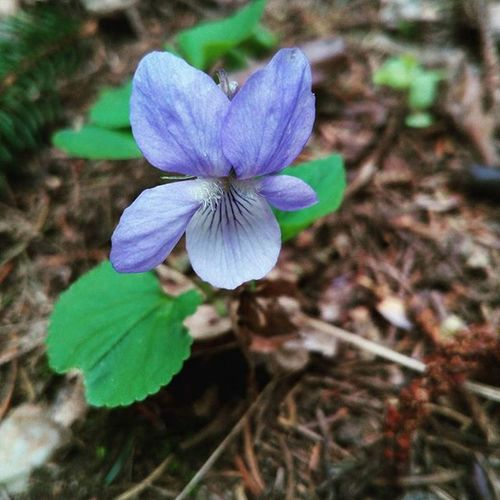 Nofillter Natural Flower Beatufil Atdogwalk Dogwalk Forest Atforest Nice Epic Super Followmepls Likeforlike