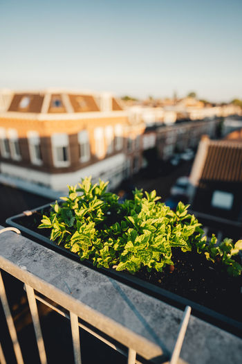 Close-up of potted plants in city against sky