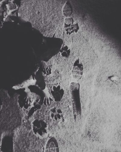 Dogs Snow