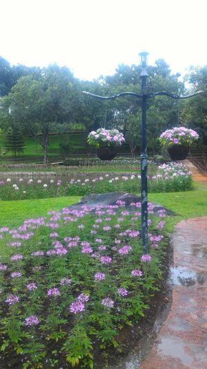 สวนดอกไม้ Garden Path Plant Life Formal Garden Botanical Garden Flowering Plant Blossom