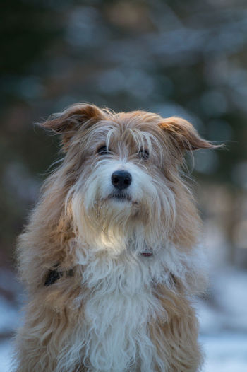 Winter Animal Hair Animal Themes Close-up Cold Day Dog Domestic Animals Focus On Foreground Forest Mammal Nature No People One Animal Outdoors Pet Pets Portrait Wood - Material