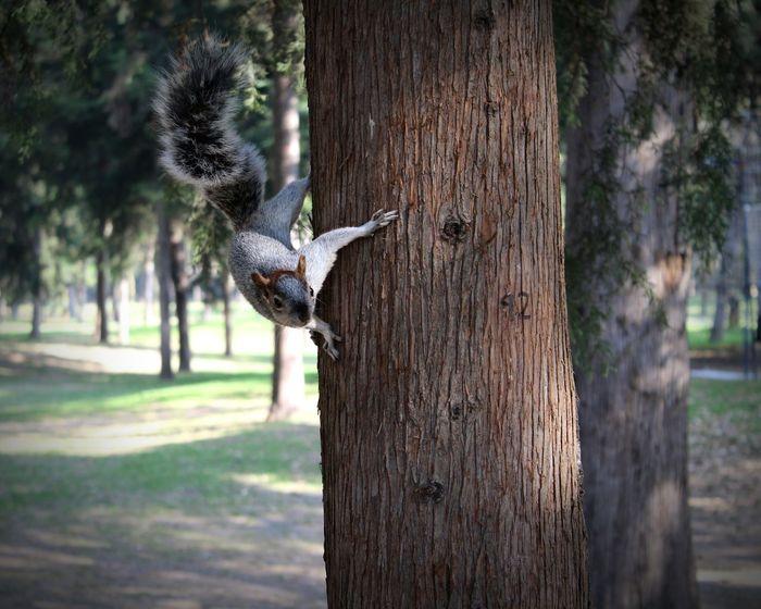 Ardilla en el DF. Faune Fauna Naturaleza Urbana Urban Nature Parks And Recreation Parquespolanco Mexico City Ardilla Chimpmunk Animals