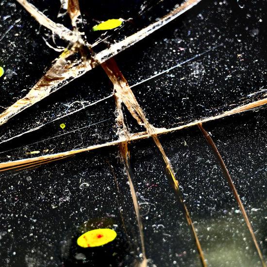 Full frame shot of wet umbrella