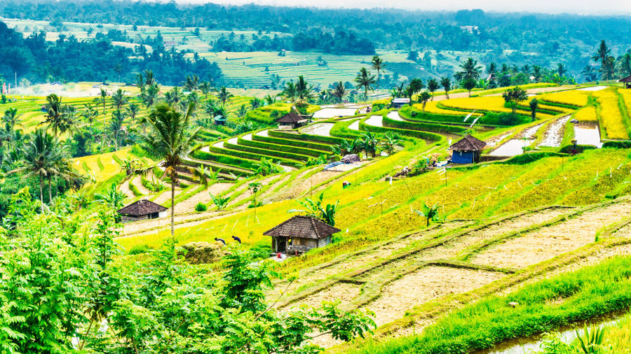 Jatiluwih Rice Terrace 1 Bali INDONESIA Jatiluwih Rice Terrace UNESCO World Heritage Site Agriculture Beauty In Nature Day Farm Field Landscape Nature Outdoors Rice Paddy Rice Terraces Rural Scene Scenics Tranquil Scene Tranquility