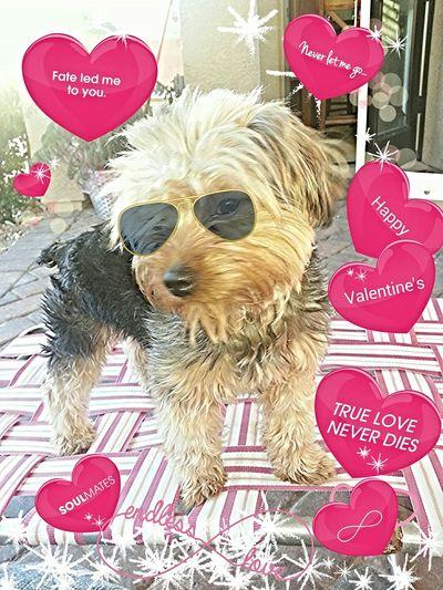 Happy Valentine's Valentine's Love <3 Puppies Today Enjoying Life