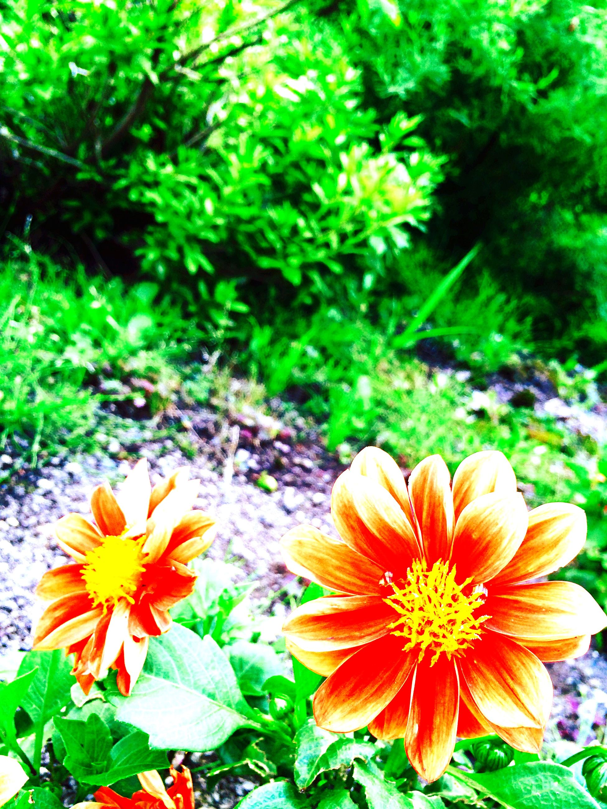 flower, petal, freshness, fragility, flower head, growth, beauty in nature, blooming, plant, nature, yellow, close-up, focus on foreground, high angle view, in bloom, pollen, orange color, green color, park - man made space, field