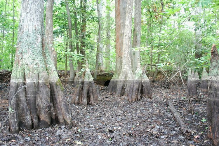 Forest Forever Swamp Fivesecondsofsummer Waterline Mud Tree Park Trail Green