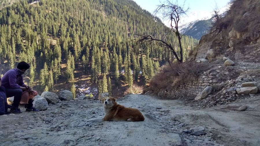 tag along my friend! Beauty In Nature Day Dog Landscape Lying Down Mountain Nature Outdoors Pets Plant Portrait Relaxation Resting Rock Rock - Object Sitting Sky TagAlong Tranquil Scene Tranquility Traveler People And Places Connected By Travel