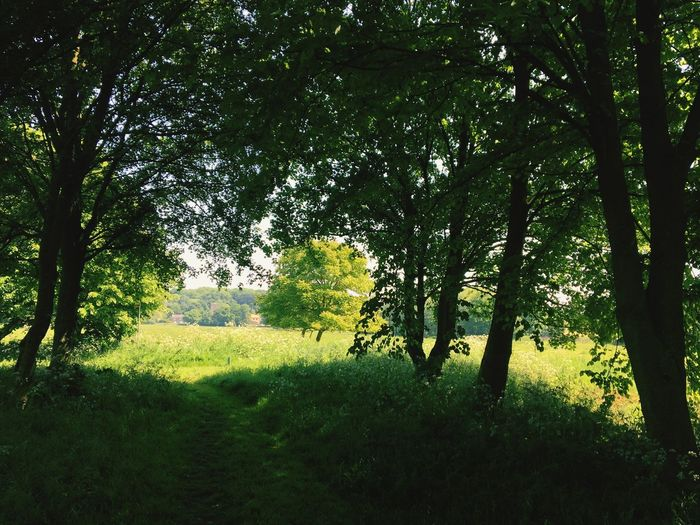 WoodLand Rural Scene Rambling England Dappled Sunlight Plant Tree Growth Green Color Land Beauty In Nature Tranquility Lush Foliage Landscape No People