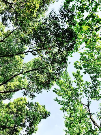 Plant Low Angle View Tree Nature No People Beauty In Nature Green Color