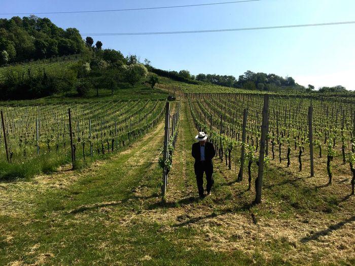 Vigneto Wine