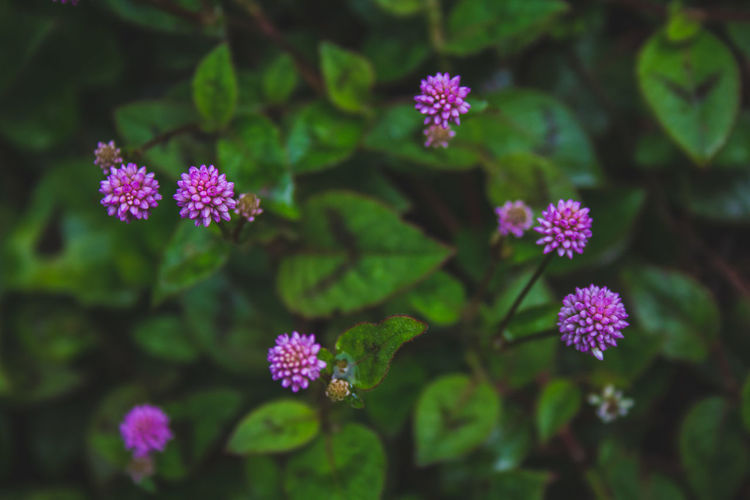 Close-up of purple flowering plant in park