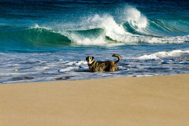 Dog on beach by sea against sky