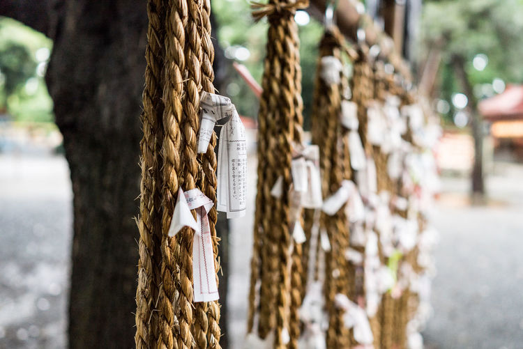 Close-up of omikujis tied with ropes