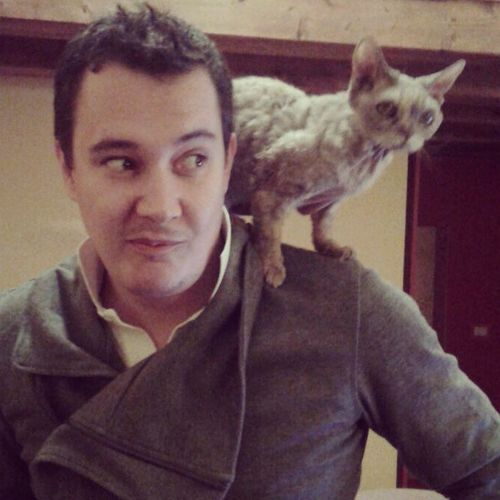 Pimpi Gwendy Devon Catoftheday Cats Catsoninstagram