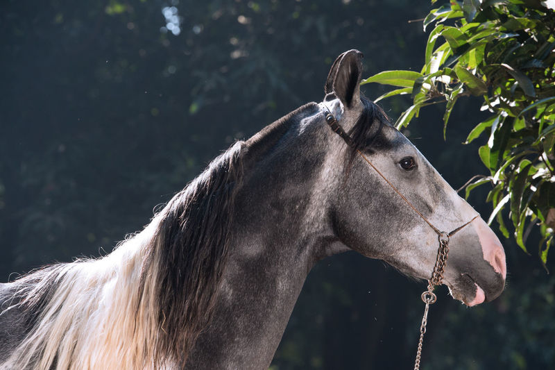 Side view of horse standing in forest
