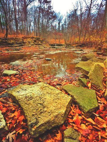 Creekscape