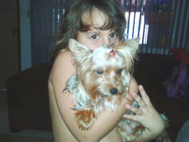 Yorkshire Terrier Yorkshire Terrier♡ Yorkshire Lua & Orion Mihija Minhaprincesa Sao Paulo - Brazil Amoremio Amoreterno Cute♡