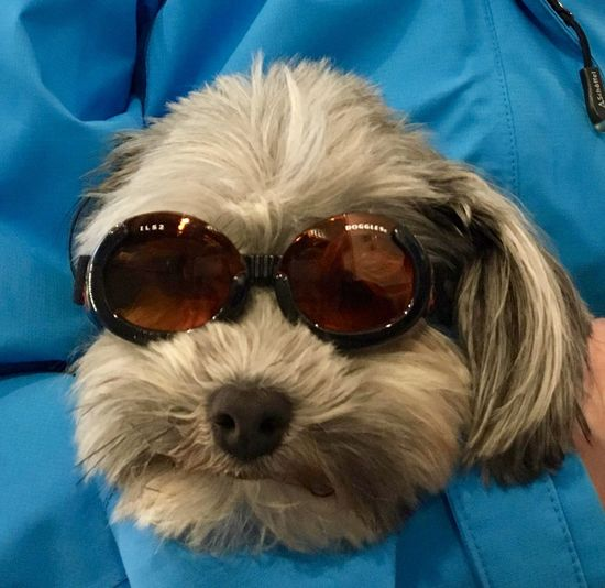 Hot Summer Sunglasses Dir dog