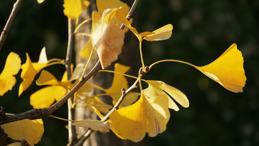Yellow Nature No People Plant Outdoors Leaf Flower Close-up Day Beauty In Nature