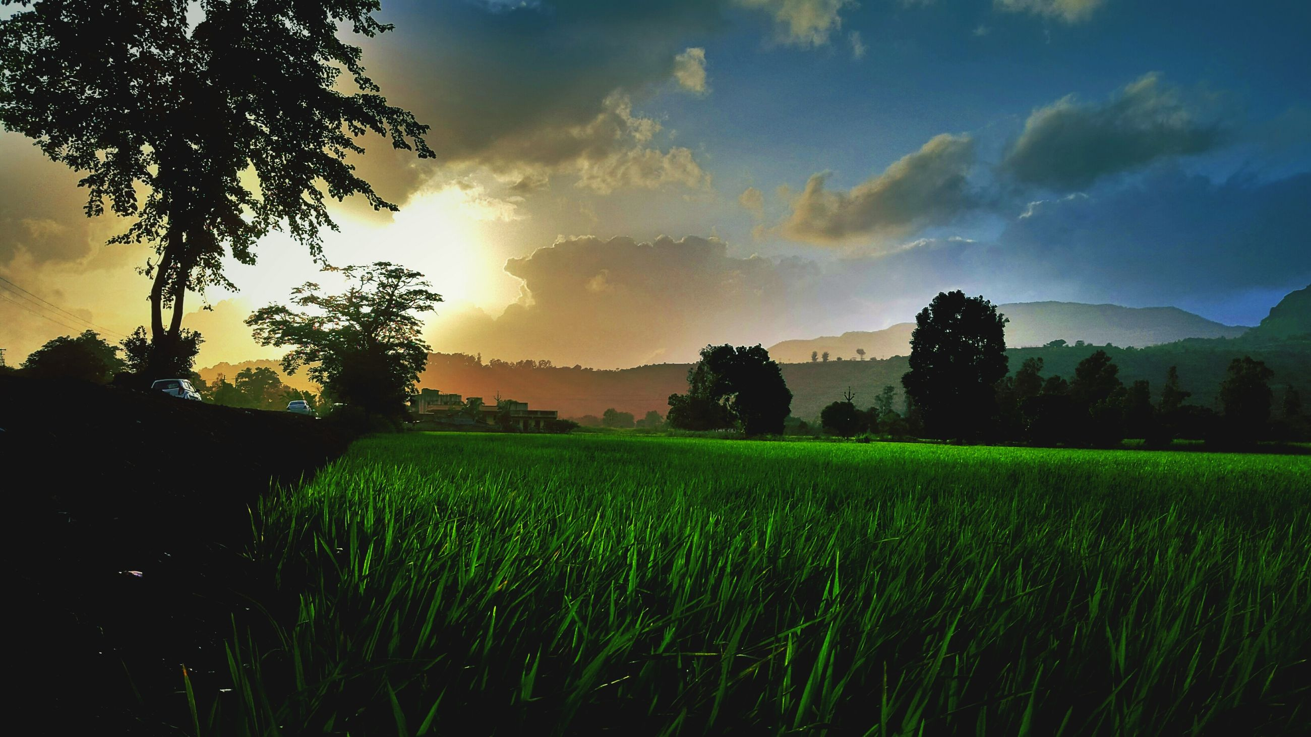 tree, tranquil scene, field, landscape, rural scene, agriculture, sunset, scenics, sky, farm, tranquility, green color, beauty in nature, growth, crop, nature, solitude, sun, cloud - sky, cultivated land, countryside, remote, outdoors, non-urban scene, no people, majestic, green