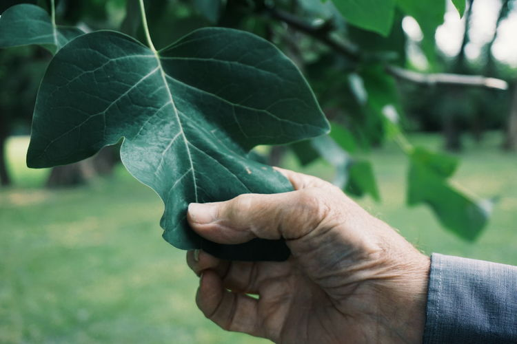 Cropped image of hand holding leaf