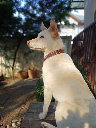 Side view of a dog looking away