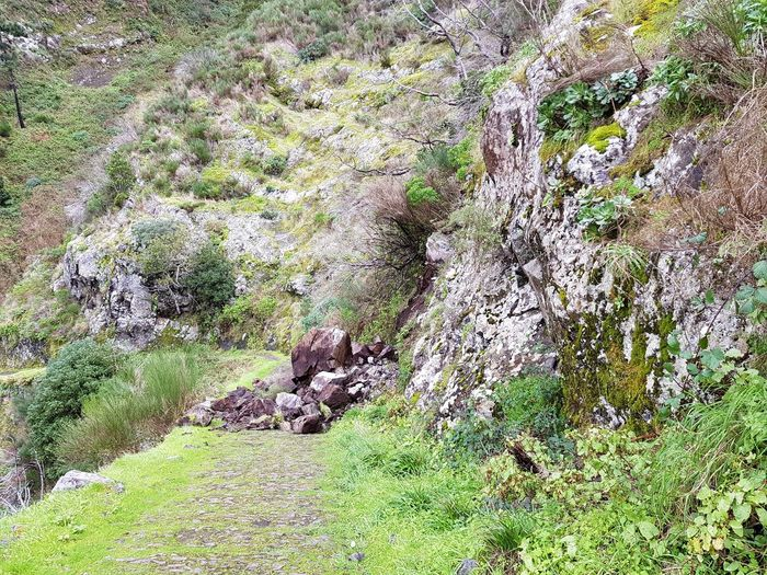 Nuns Valley Mountain Mountain Range Hiking Hiking Trail Vacation Time Rock - Object Photography Bildfolge Landscape_photography Madeira Island Danger Rockfall Landslide Disorder Landscape Backgrounds Day Outdoors No People Nature Green Color Grass Close-up Beauty In Nature Plant Scenics