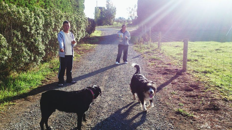 My dogs out walking with the Neighbors New Zealand Scenery Tranquil Scene Rural Scene Walking The Dog Walking The Dogs