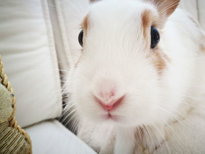 EyeEm Selects Pets Animal Hamster Looking At Camera Domestic Animals Mammal Portrait One Animal Cute Indoors  Nose Close-up Animal Themes No People Day Rabbit Bunny  Pet Portraits