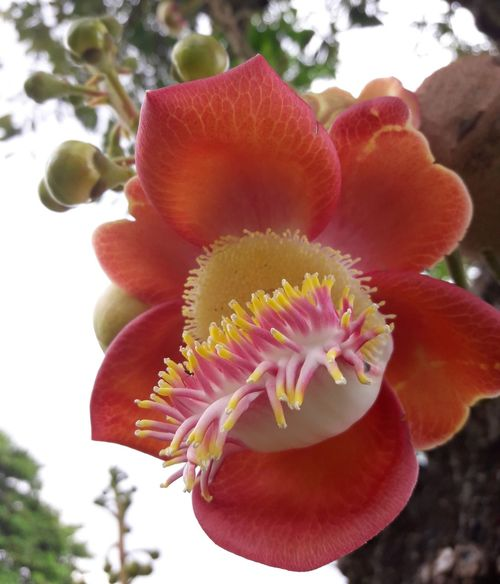Petals and coral of a tree. Flower Nature Plant No People Beauty In Nature Flower Head