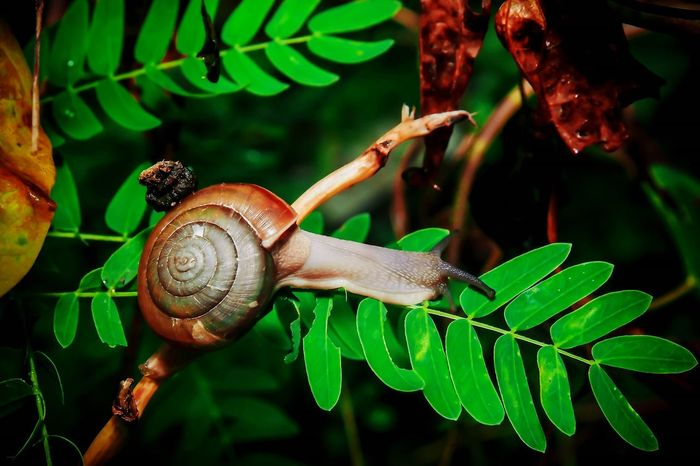 Snail One Animal Animal Themes Wildlife Gastropod Animals In The Wild Leaf Nature Close-up Insect Fragility Animal Wildlife Green Color No People