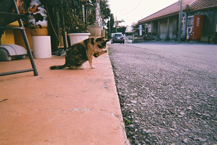 島のネコちゃん① Okinawa OKINAWA, JAPAN Film Photography Animal Themes Cat Street