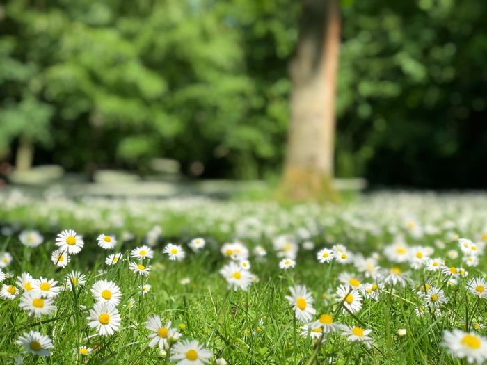 Flower Flowering Plant Plant Freshness Growth Fragility Vulnerability  Beauty In Nature Land Nature Day Yellow No People Green Color Field
