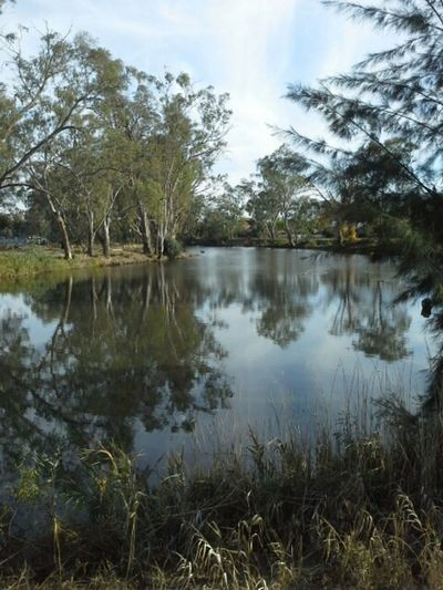 Reflecting on a Sunday afternoon Relaxing Tranquil Scene Australian Landscape Wagga Wagga Serenity Australia Ducks Beauty In Nature Reflections Gum Trees Riverside Photography Scenic View Trees The Great Outdoors - 2016 EyeEm Awards