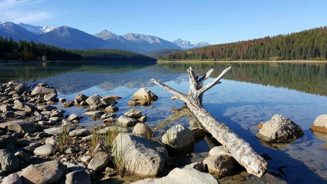 Mountain Lake Water Tranquil Scene Mountain Range Scenics Tranquility Reflection Beauty In Nature Tree Non-urban Scene Clear Sky Nature Majestic Idyllic Calm Travel Destinations Physical Geography Blue Mountain Peak Driftwood Pyramid Lake Jasper Alberta Canada