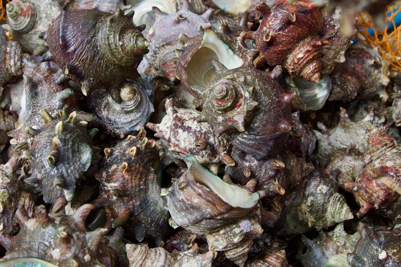 Jeju Seafood Animal Themes Close-up Day Jejudo Mollusk Mussles Nature No People Outdoors Sea Creatures Shell Shells Textured  UnderSea