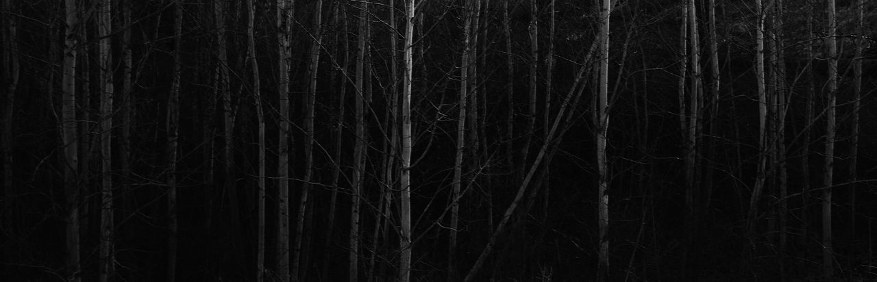 Tree scene. Aspen Trees Darkness Darkness And Light Landscape Lines Night Scene Small Trees Symmetry Tree Tree_collection  Trees Vertical Vertical Symmetry White Bark
