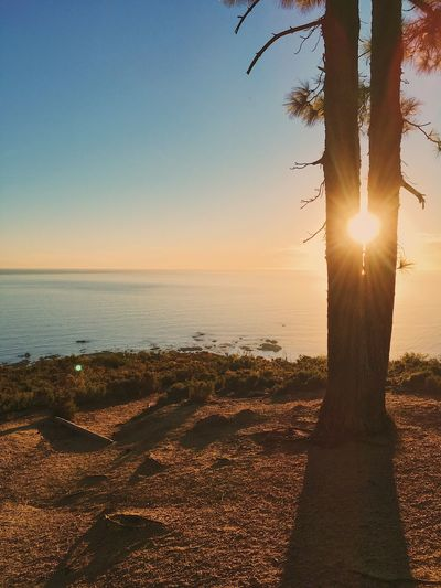 Sunset in Cape Town. Beach Beauty In Nature Day Horizon Over Water Idyllic Landscape Nature No People Outdoors Sand Scenics Sea Sky Sun Sunlight Sunset Tranquil Scene Tranquility Tree Tree Trunk Water
