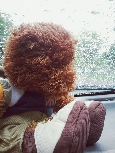 little bear Outdoors Decoration Wallpaper Background Focus On Foreground Sadness Waterdrop Sad & Lonely Waiting For You Text Bear Doll Photography Teddybear After Rain Rainy Days Cute♡ Fresh