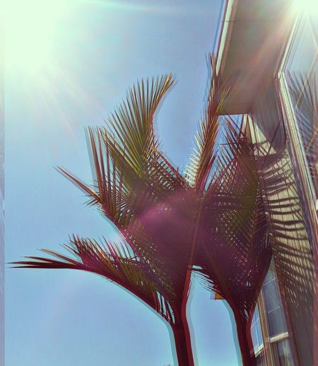 Home ☀ Taking Photos Summer Beautiful DOPE