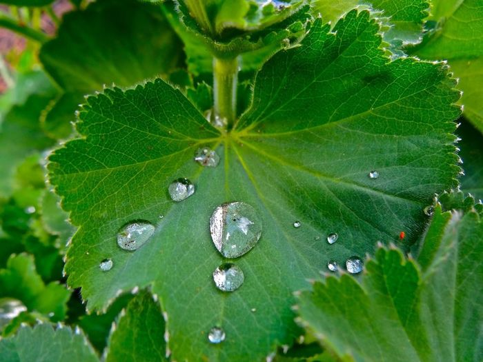 Water Droplets Nature_collection EyeEm Nature Lover
