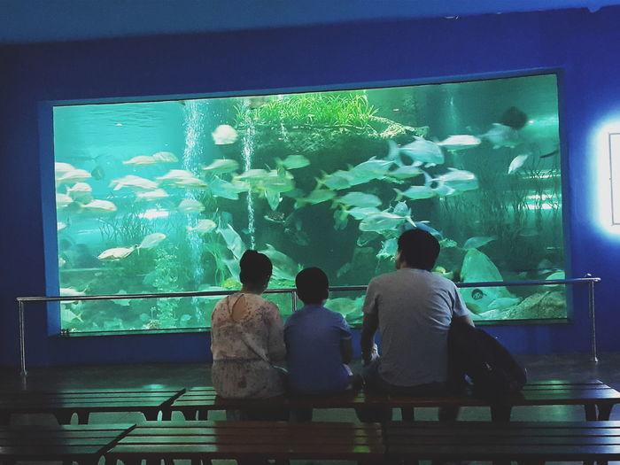 👪👪👪 Aquarium